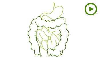 4 способа улучшить работу кишечника