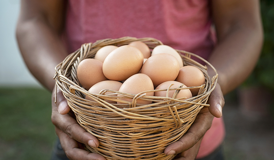 Male hands holding wire basket of fresh chicken eggs.