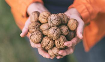 Ешьте больше этого ореха, чтобы улучшить пищеварение