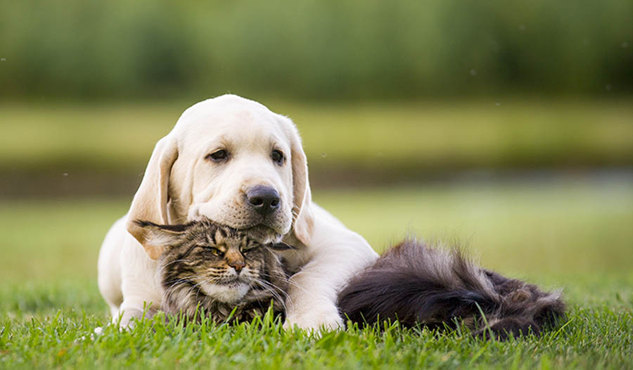 How to Keep Your Dog or Cat Healthy