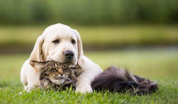 Как поддерживать здоровье вашей кошки или собаки