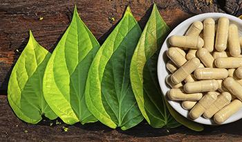 Кава-кава — натуральная трава с многообещающими успокоительными свойствами