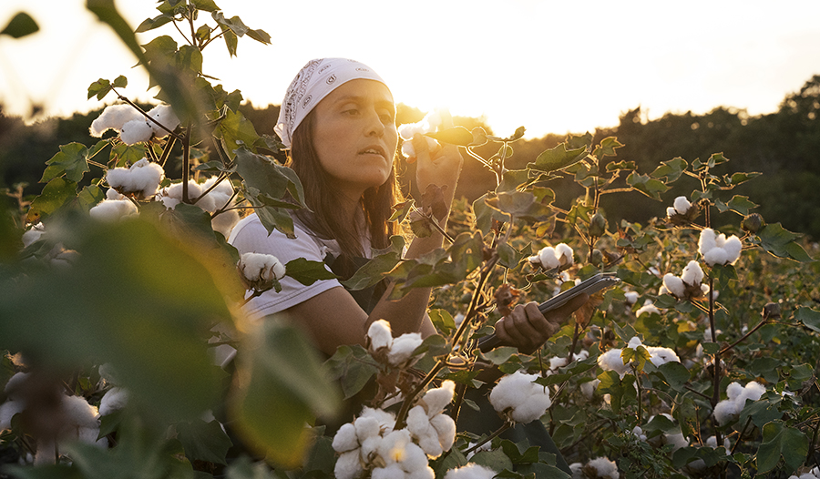 Young woman with bandanna in cotton field checking quality of plant