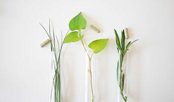 Натуральные травы и сосудистая деменция