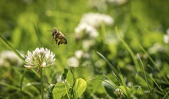 Народные средства от укусов пчел