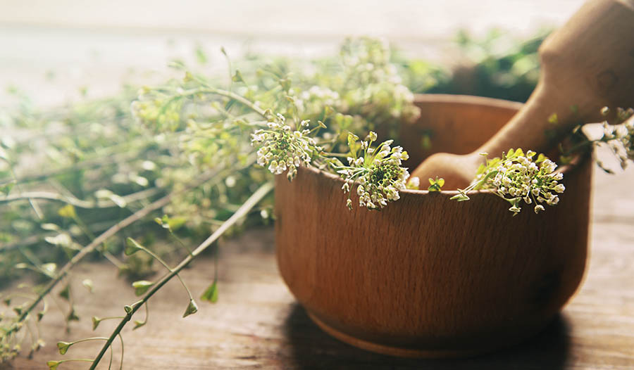 Phytosomes – Increase the absorption of herbal extracts