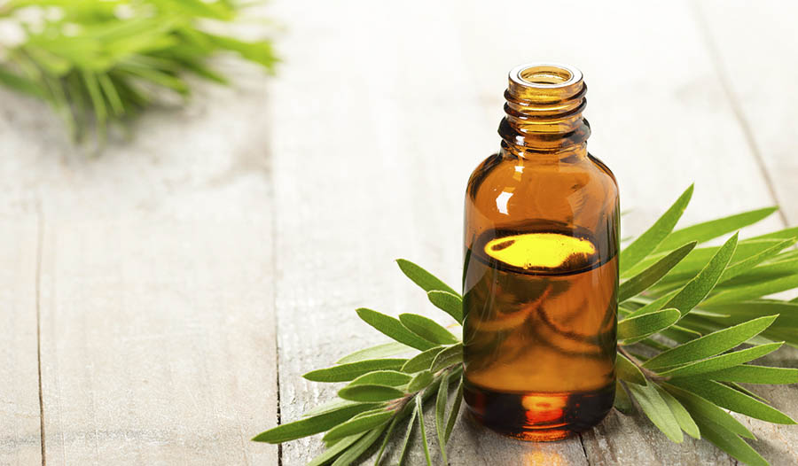 Essential oil bottle on table with pine leaves