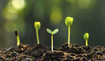 Что значит «без ГМО»?