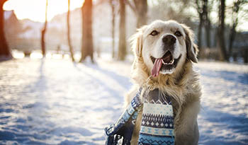 Советы по здоровью домашних животных