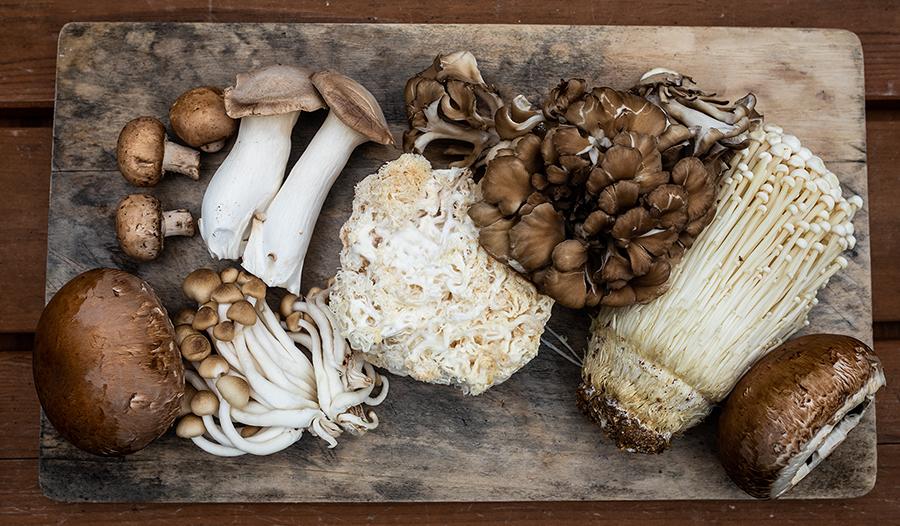 Несколько видов свежесобранных грибов, разложенных на деревянной доске.
